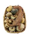Monty, Monitoreidechse, die Kürbisse in einem Garten trägt - Keramik 06