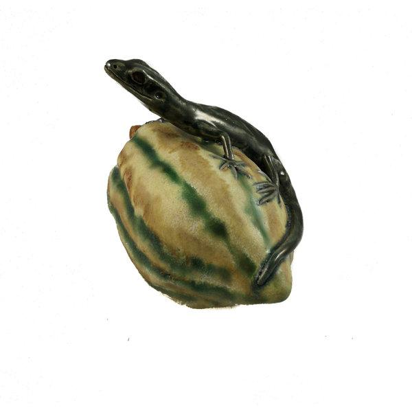 Pequeño lagarto en squash 16