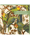 Birds of America10 Notecard Pack
