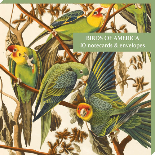 Fitzwilliam Museum Birds of America10 Notecard Pack