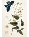 Vlinders 10 Notecard Pack