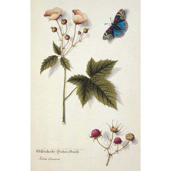 Butterflies 10 Notecard Pack