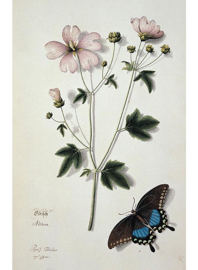 Schmetterlinge 10 Notecard Pack