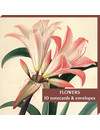 Flowers Amarylis 10 Notecard Pack
