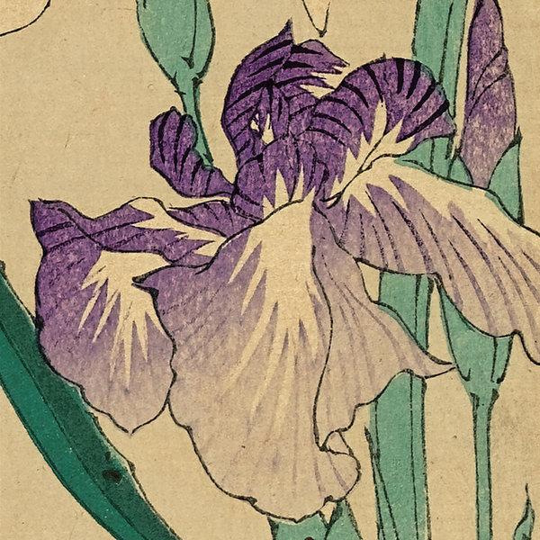 Japanese Flowers 10 Notecard Pack