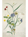 Meadow Flowers 10 Notecard Pack