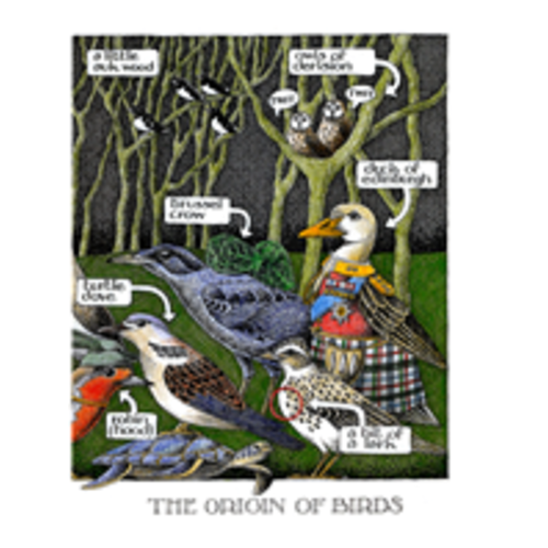 Simon Drew Designs The Origin of Birds card 105