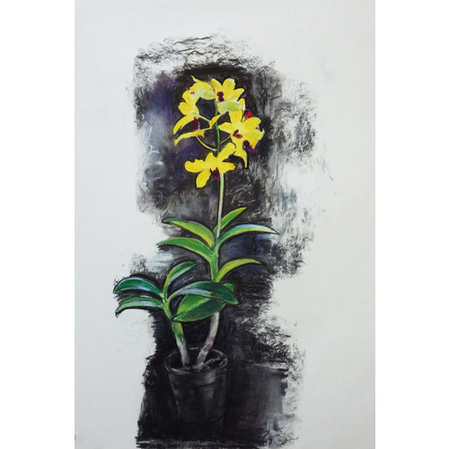 Mike Holcroft Yellow Orchid charcoal and pastel on paper 73