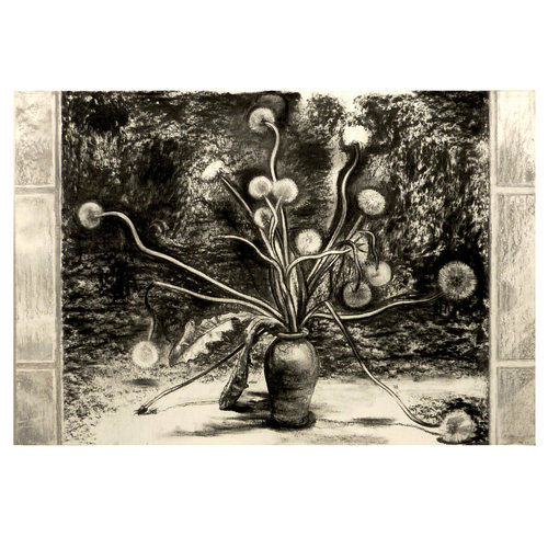 Mike Holcroft Taraxacum charcoal on paper 71