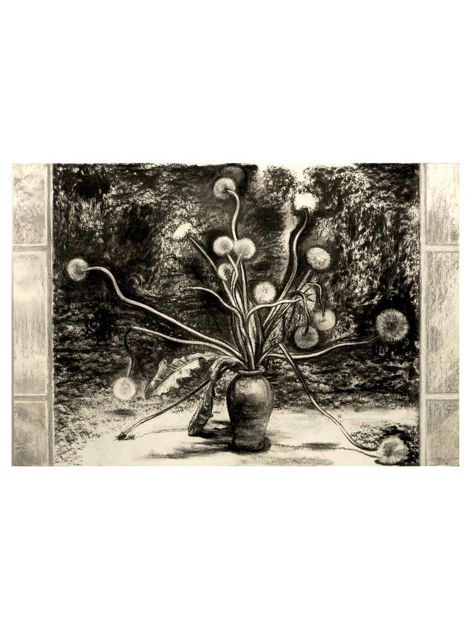 Taraxacum charcoal on paper 71