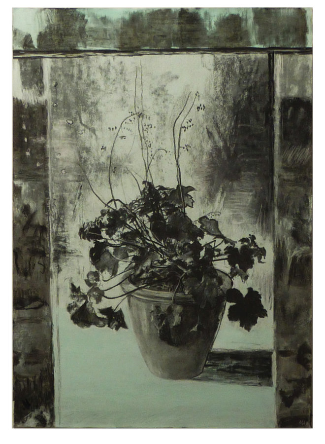 Heuchera charcoal and acrylic on paper 68
