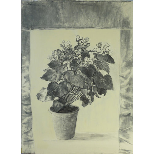 Mike Holcroft Begonia charcoal on paper 66