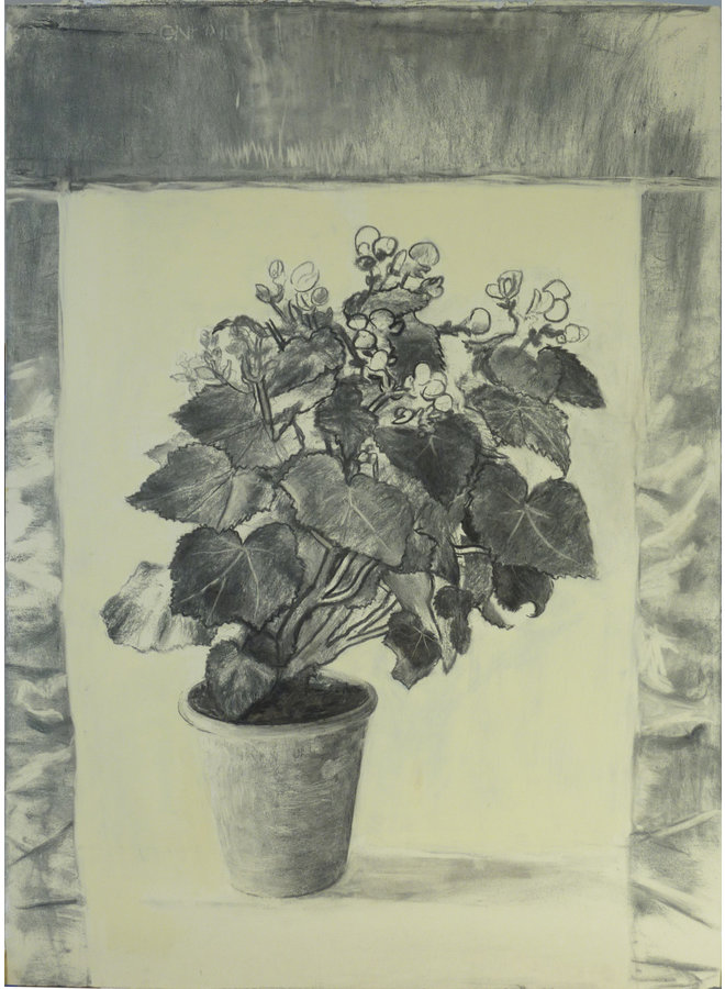 Begonia charcoal on paper 66