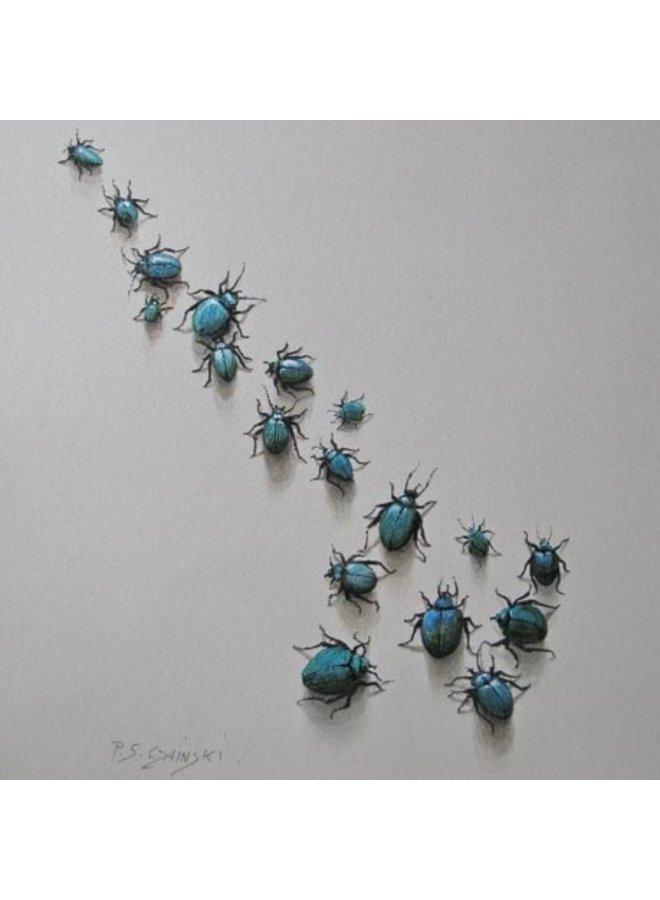 Beetles 13