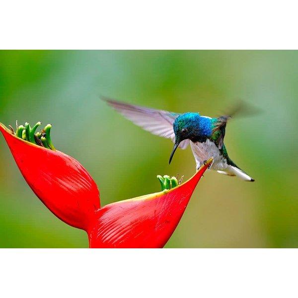 2020 Hummingbird Midi Daily Diary Gebundene Ausgabe
