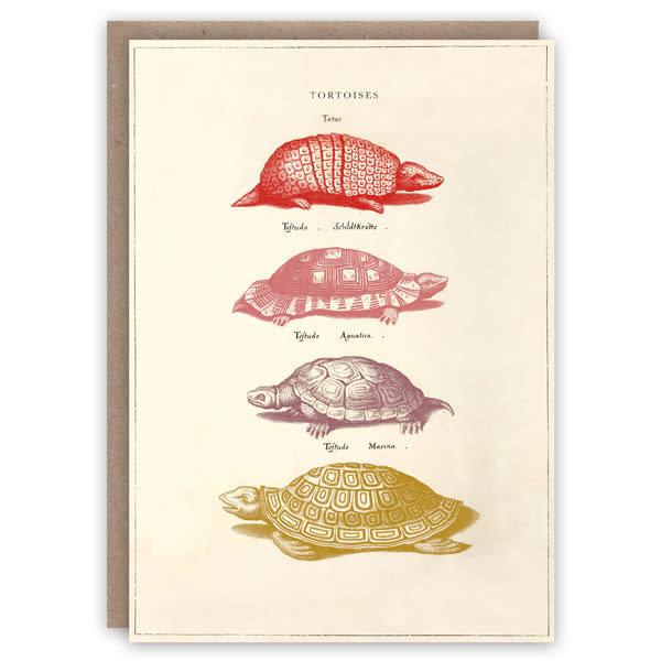 Tarjeta de libro de patrón de tortugas