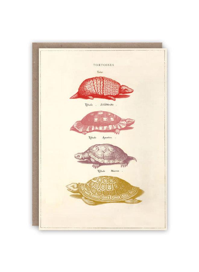 Schildkröten-Musterbuchkarte