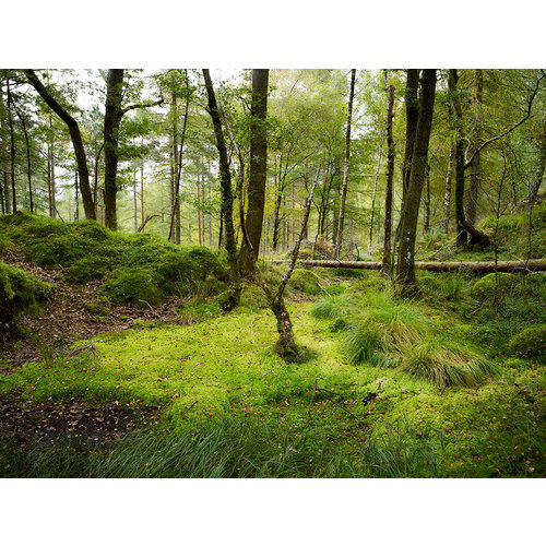 Stuart Royse Woodland, Cumbria 06