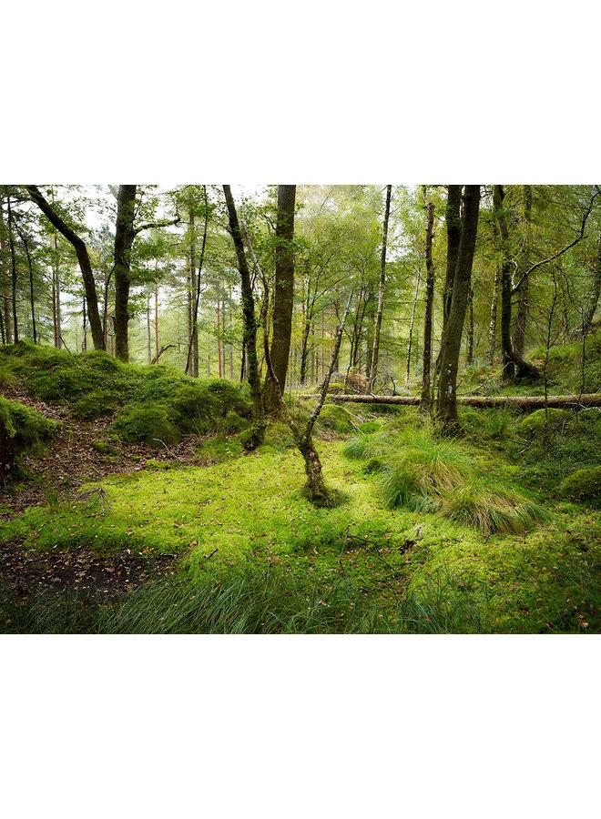 Woodland, Cumbria 06