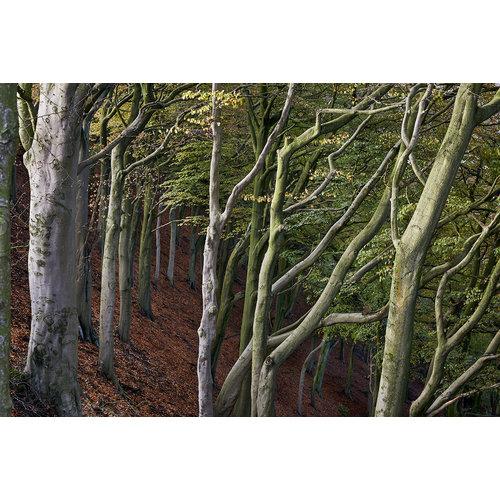 Stuart Royse Woodland, Todmorden 03