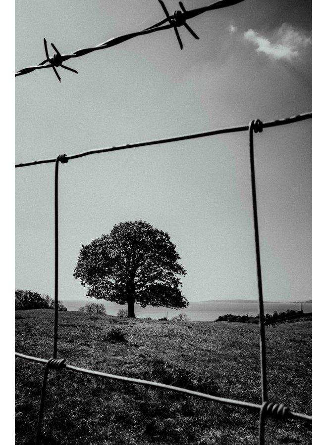 """Trapped"" Arnside UK"