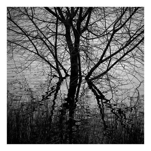 Peter Defty Ogden Water, West Yorkshire - Serie Elementos del paisaje
