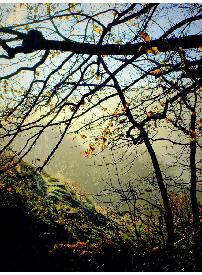 Misty Woodland 3, Hebden Bridge