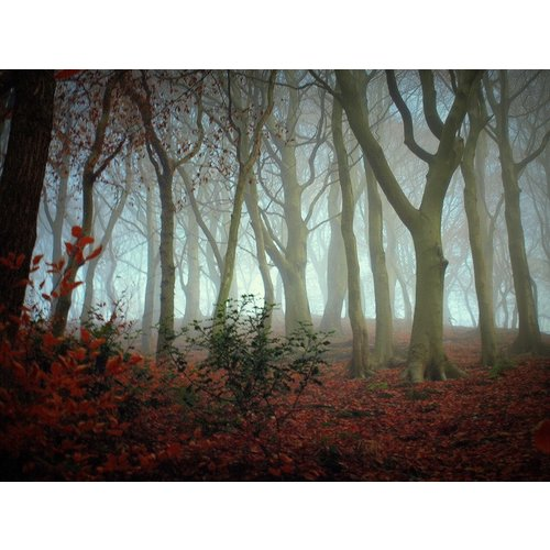 Linda Hodges Misty Woodland 1, Hebden Bridge