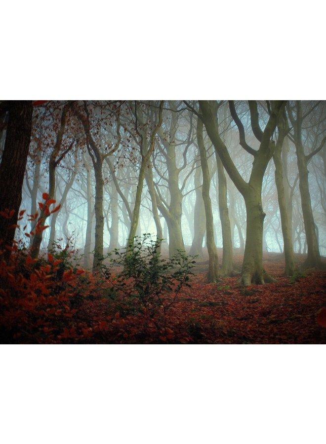Misty Woodland 1, Hebden Bridge