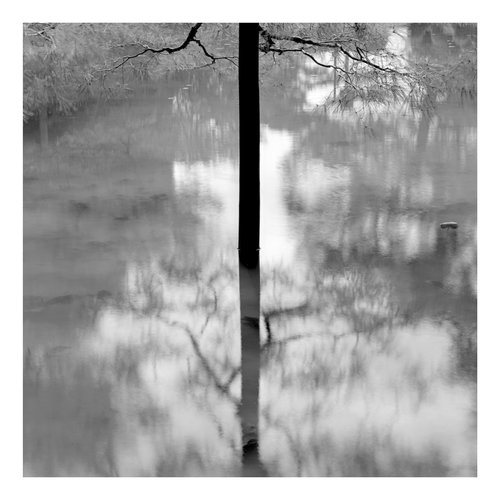 Peter Defty Kyoto Trees - Elements of Landscape Series