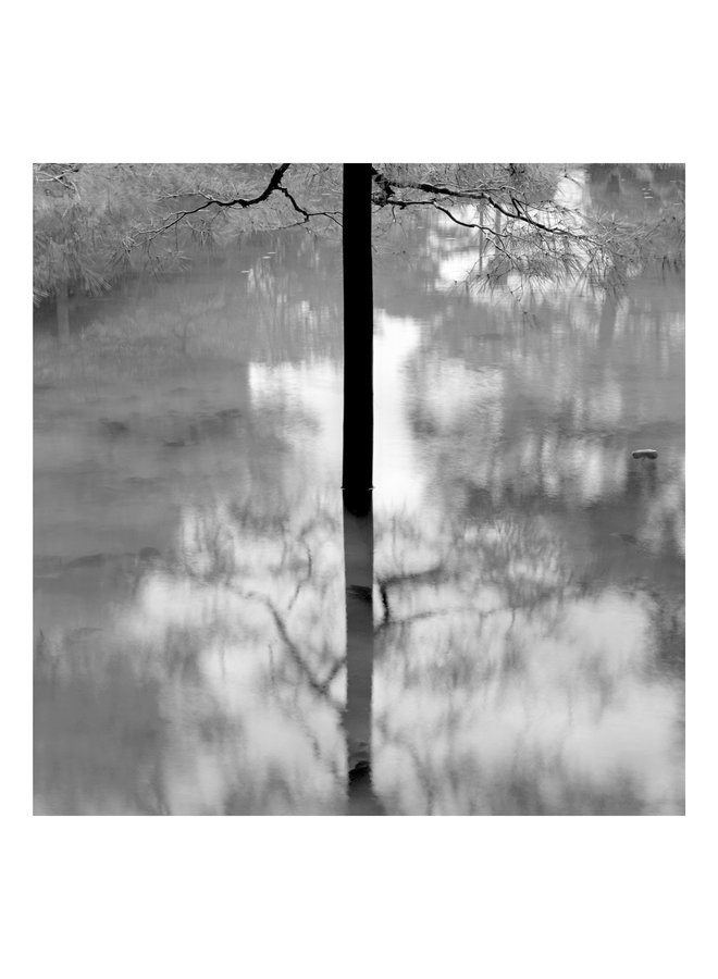 Kyoto-Bäume - Elemente der Landschaftsserie