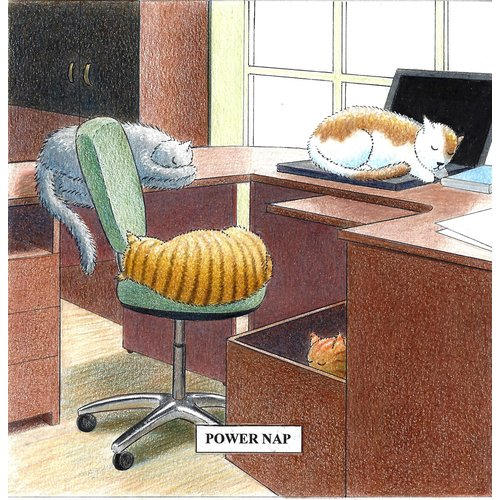 Adrian Keefe Power Nap Humorous Cat card 14