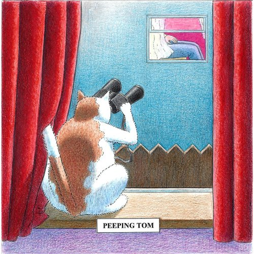 Adrian Keefe Peeping Tom  Humorous Cat card 13