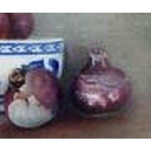 Linda Brill Bulbos de jacinto y China Bowl 035