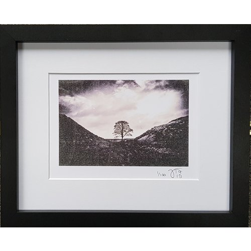 Timothy Grundy Tree of The Year Print 1 of 100 - 06