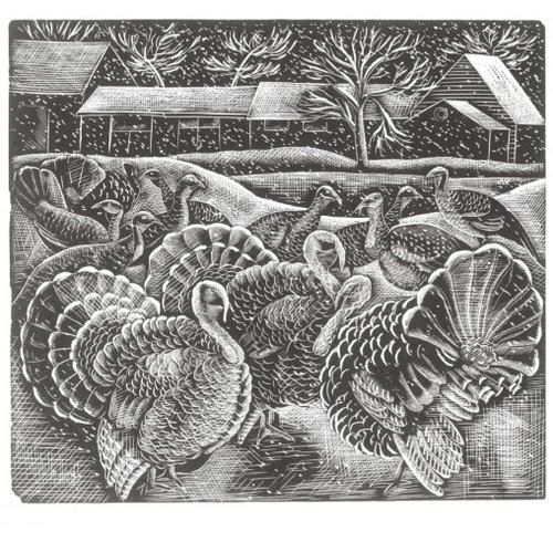Artists Cards Turkeys in the Snow by Mary Groom   x5 Xmas Charity cards 140x140mm