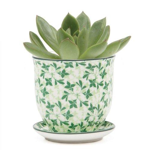 Chive Grüne Blätter Liberte Keramik Mini Pflanzgefäße 004
