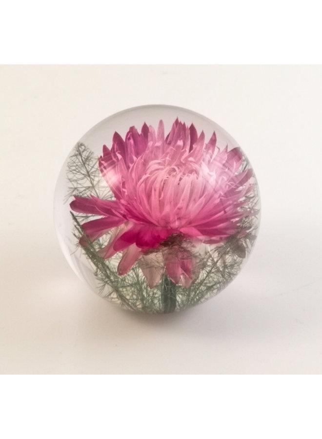 Rosa Helichrysum echte Blume Briefbeschwerer 08