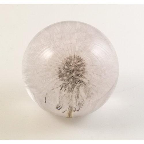 Hafod Dandelion real flower paper weight 01
