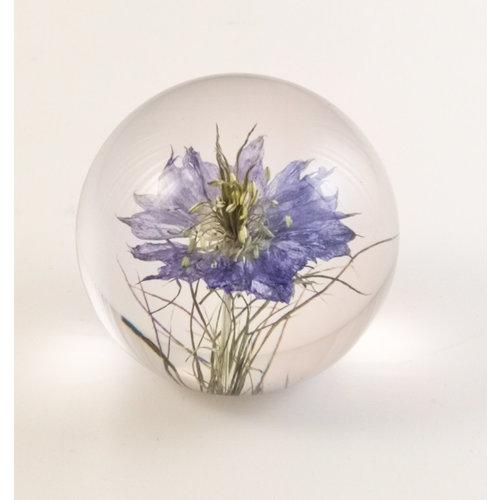 Hafod Nigella real flower paper weight 04