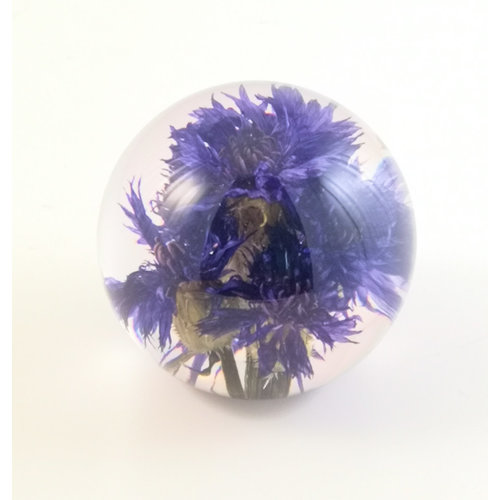 Hafod Cornflower real flower paper weight 05