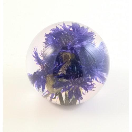 Hafod Papiergewicht 05 der echten Blume der Kornblume