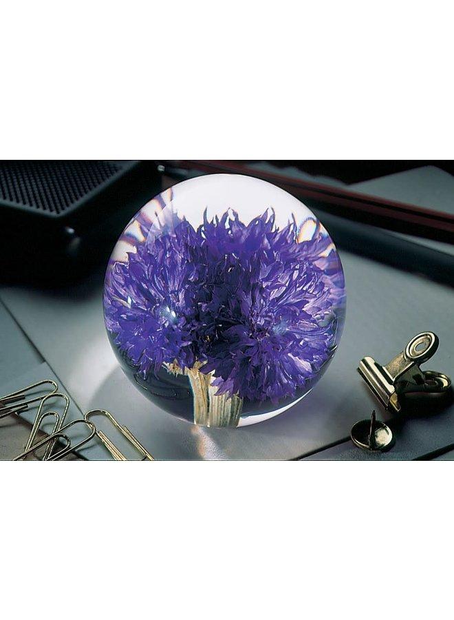 Papiergewicht 05 der echten Blume der Kornblume