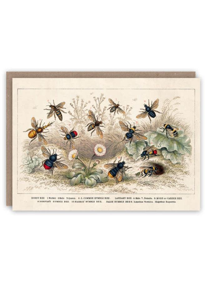 Honigbienenmuster-Buchkarte