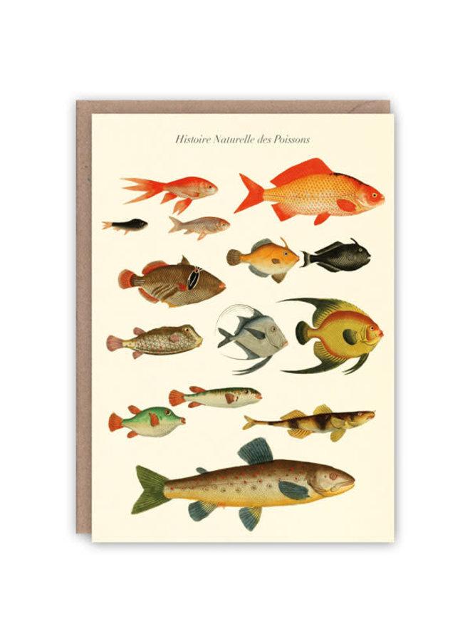 Histoire des Poissons Musterbuchkarte