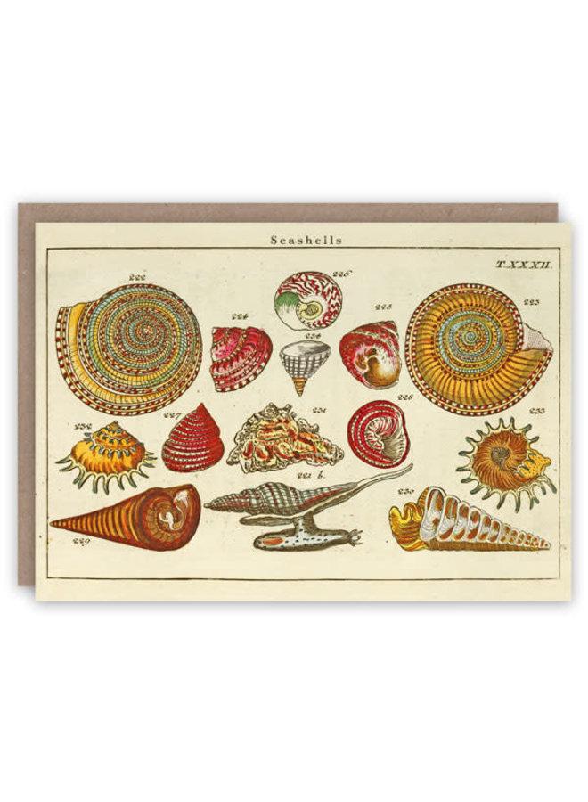 Sea Shells Musterbuchkarte