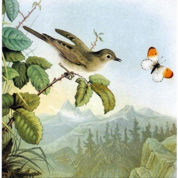 Natural History of Birds door Eugenio Bettoni 140x140mm kaart