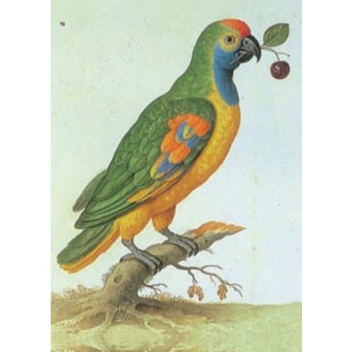 Artists Cards Amazone papegaai door Johann Walter 140x 180 mm kaart