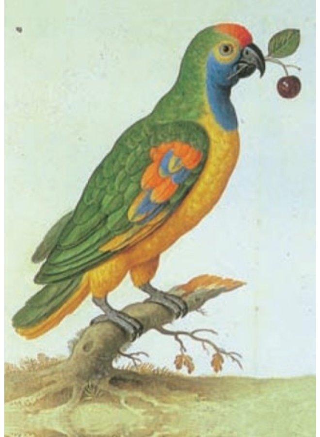 Amazon Parrot von Johann Walter 140x 180mm Karte