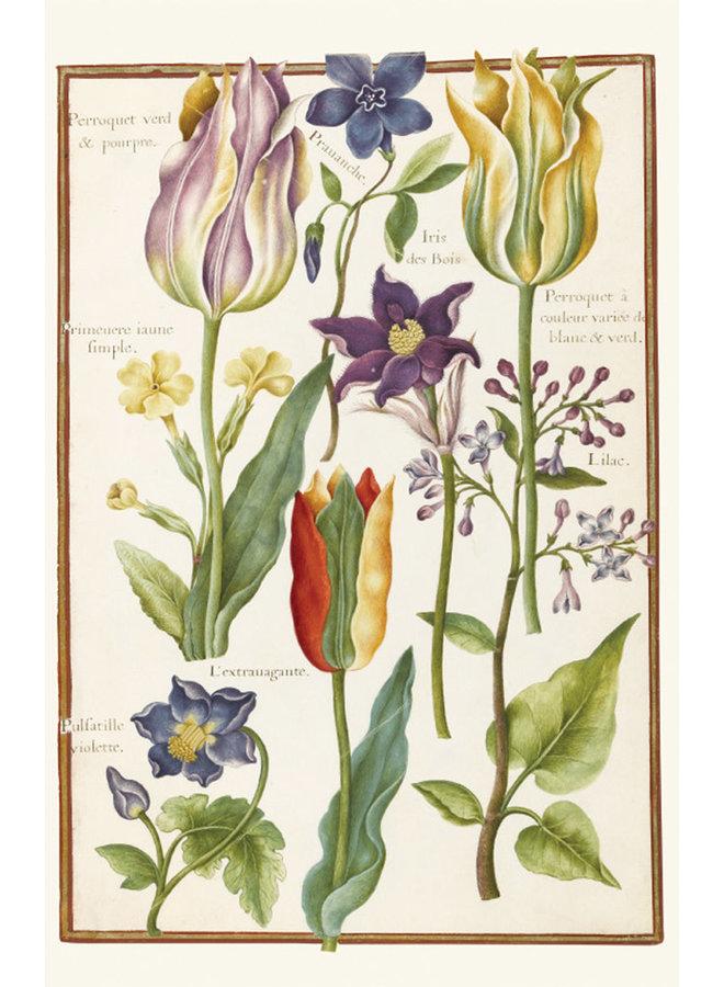 Botanische Zeichnungen von Nicolas Robert 10 Notecard Pack
